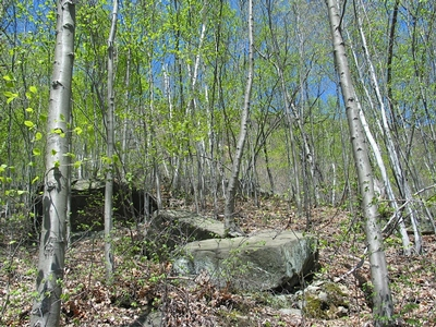 Birch, aspen and wild cherry