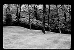 Tomkins: Tree