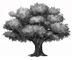 Genetic Tree